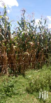Land 10 Acres In Kitale Sinyerere | Land & Plots For Sale for sale in Trans-Nzoia, Sinyerere