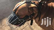 Big Dog Strong Muzzle   Pet's Accessories for sale in Nairobi, Kariobangi South