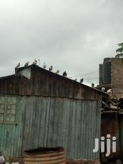 Pigeons On Sale | Birds for sale in Nairobi, Kahawa