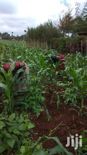 Lucrative 50 by 100 Fertile Land on Highway | Land & Plots For Sale for sale in Uasin Gishu, Kapsaos (Turbo)