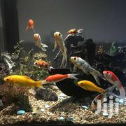 Ornamental Fish(Goldfish) | Fish for sale in Nairobi, Kitisuru