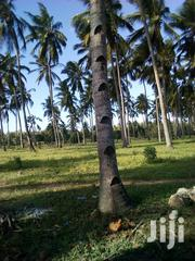 5 Acres Matsangoni With a Clean Title Deed | Land & Plots For Sale for sale in Kilifi, Matsangoni
