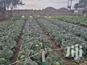 Farm Management Services | Other Services for sale in Meru, Timau