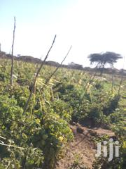 Agriculture Land,And Plots | Land & Plots For Sale for sale in Kajiado, Kimana