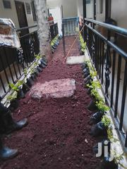 Landscaping   Landscaping & Gardening Services for sale in Nairobi, Nairobi Central