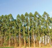 Blue Gums Trees*9years Old* | Garden for sale in Nairobi, Kilimani