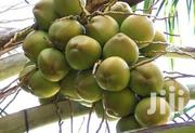 Tender Coconut/Madafu | Meals & Drinks for sale in Kilifi, Kaloleni