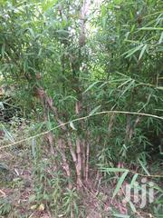 Bamboo Poles,Bamboo Sticks,Bamboo Fodder,Bamboo Culms For Sale | Feeds, Supplements & Seeds for sale in Nyeri, Mukurwe-Ini Central