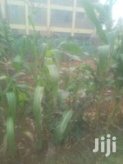 Half Acre .Grab Fast Before It Has Gone | Land & Plots For Sale for sale in Tharaka-Nithi, Mariani