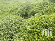 Nyeri Mukarara 1acre Tea Land at 3m | Land & Plots For Sale for sale in Nyeri, Kamakwa/Mukaro