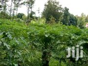 1/2acre With River Frontage | Land & Plots For Sale for sale in Kirinyaga, Kariti