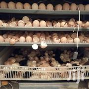 528 Chicken Egg Incubator | Farm Machinery & Equipment for sale in Nairobi, Embakasi