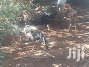 Pure Kuchi Chicken | Livestock & Poultry for sale in Kajiado, Ongata Rongai