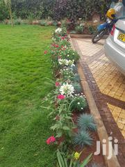 Landscaping And Gardening Services | Landscaping & Gardening Services for sale in Nairobi, Nairobi Central