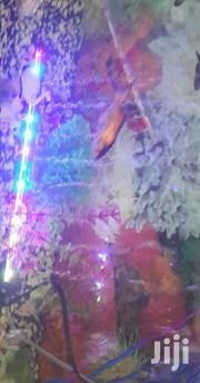 Led Light With Aircurtain | Fish for sale in Nairobi, Nairobi Central