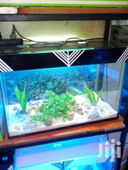 Aquariums For Sale Complete One | Fish for sale in Nairobi, Imara Daima