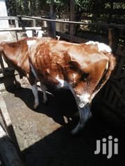 Young Jersey Heifer In Calf Three Months | Other Animals for sale in Meru, Ntima West