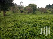 4½ Acres Gatura With Tea | Land & Plots For Sale for sale in Murang'a, Gatanga