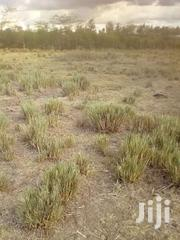 1.5 Acres For Sale At Endana, Nanyuki | Land & Plots For Sale for sale in Laikipia, Segera
