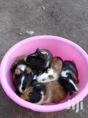 Gunea Pig Pets | Other Animals for sale in Kisumu, East Seme