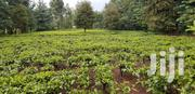 1/2 an Acre Touching Highway for Sale in Kapsuser | Land & Plots For Sale for sale in Kericho, Kapsuser