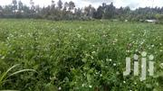 2 Acre Seperately Each With Water And Electricity Supply | Land & Plots For Sale for sale in Nyandarua, Weru
