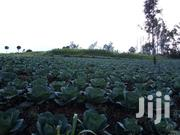 Cabbages Mature | Feeds, Supplements & Seeds for sale in Nyandarua, Karau
