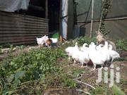 Broiler Chicken | Livestock & Poultry for sale in Nairobi, Ngara