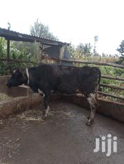 Selling Cows | Livestock & Poultry for sale in Nakuru, Bahati