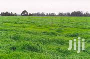 1/8 Acre Narumoru Nanyuki Plots | Land & Plots For Sale for sale in Nyeri, Naromoru Kiamathaga