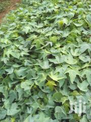 Mugendi Fruit Seedlings | Feeds, Supplements & Seeds for sale in Embu, Mbeti North