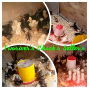 Improved Kienyeji Chicks And Poultry Products | Livestock & Poultry for sale in Nairobi, Nairobi Central