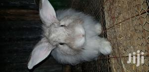 Young and Old Rabbits for Sale
