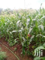 Sale of I And3/4 Acres Kiritiri Market | Land & Plots For Sale for sale in Embu, Mavuria