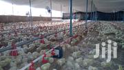 Poultry Farm | Commercial Property For Sale for sale in Machakos, Kithimani