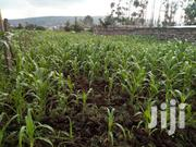 Land For Sale In Makao Kiti Nakuru | Land & Plots For Sale for sale in Nakuru, Nakuru East