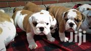 Young Female Purebred Bulldog | Dogs & Puppies for sale in Nairobi, Nairobi Central