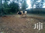 Mature 7 Year Old Bull On Sale | Other Animals for sale in Kiambu, Ndenderu