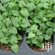 Herbs And Spices Potted Seedlings | Feeds, Supplements & Seeds for sale in Nairobi, Nairobi Central