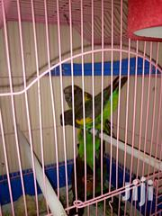 Ornamental Birds | Birds for sale in Nairobi, Nairobi Central