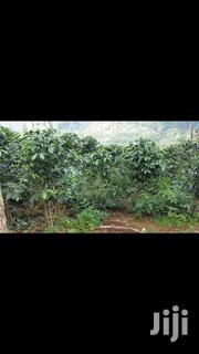 Land With a Permanent House | Land & Plots For Sale for sale in Kiambu, Kiganjo
