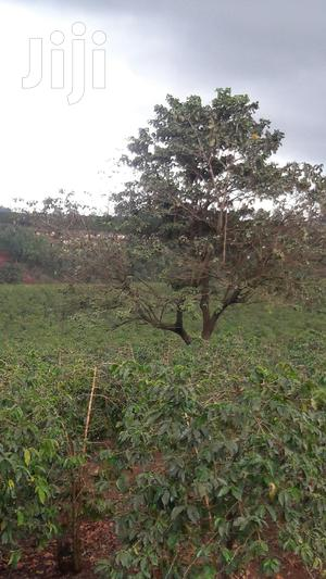 20 Acres of Land in Kirigiti