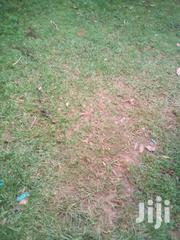 Prime Plots | Land & Plots For Sale for sale in Busia, Bukhayo West