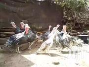 Turkey For Sale | Livestock & Poultry for sale in Kiambu, Kikuyu