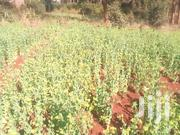 A Very Prime Plot in Kabete Ideally for Residential | Land & Plots For Sale for sale in Kiambu, Kabete
