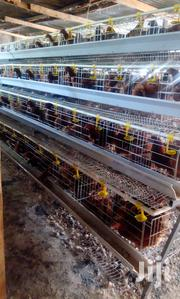 Commercial Layers | Livestock & Poultry for sale in Nairobi, Kileleshwa