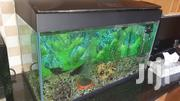 80 L Aquarium | Fish for sale in Nairobi, Kileleshwa