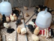 4 Days Improved Kienyeji Chicks | Livestock & Poultry for sale in Nairobi, Komarock