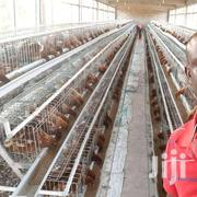 1024 Birds Cage | Livestock & Poultry for sale in Nairobi, Kasarani