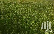 Prime Land/Farm for Sale!! | Land & Plots For Sale for sale in Nakuru, Molo